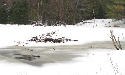 Beaver Lodges