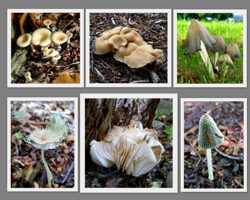 fungi-2016
